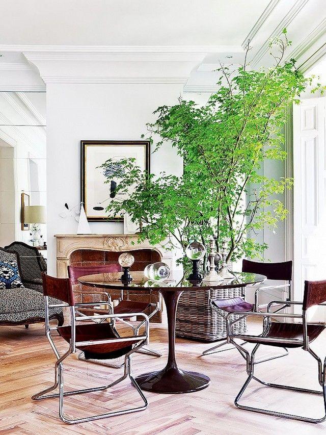 indoor plants apartment more grown up