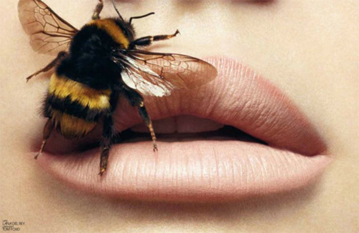 how to get fuller lips beauty how-to bee stung lips