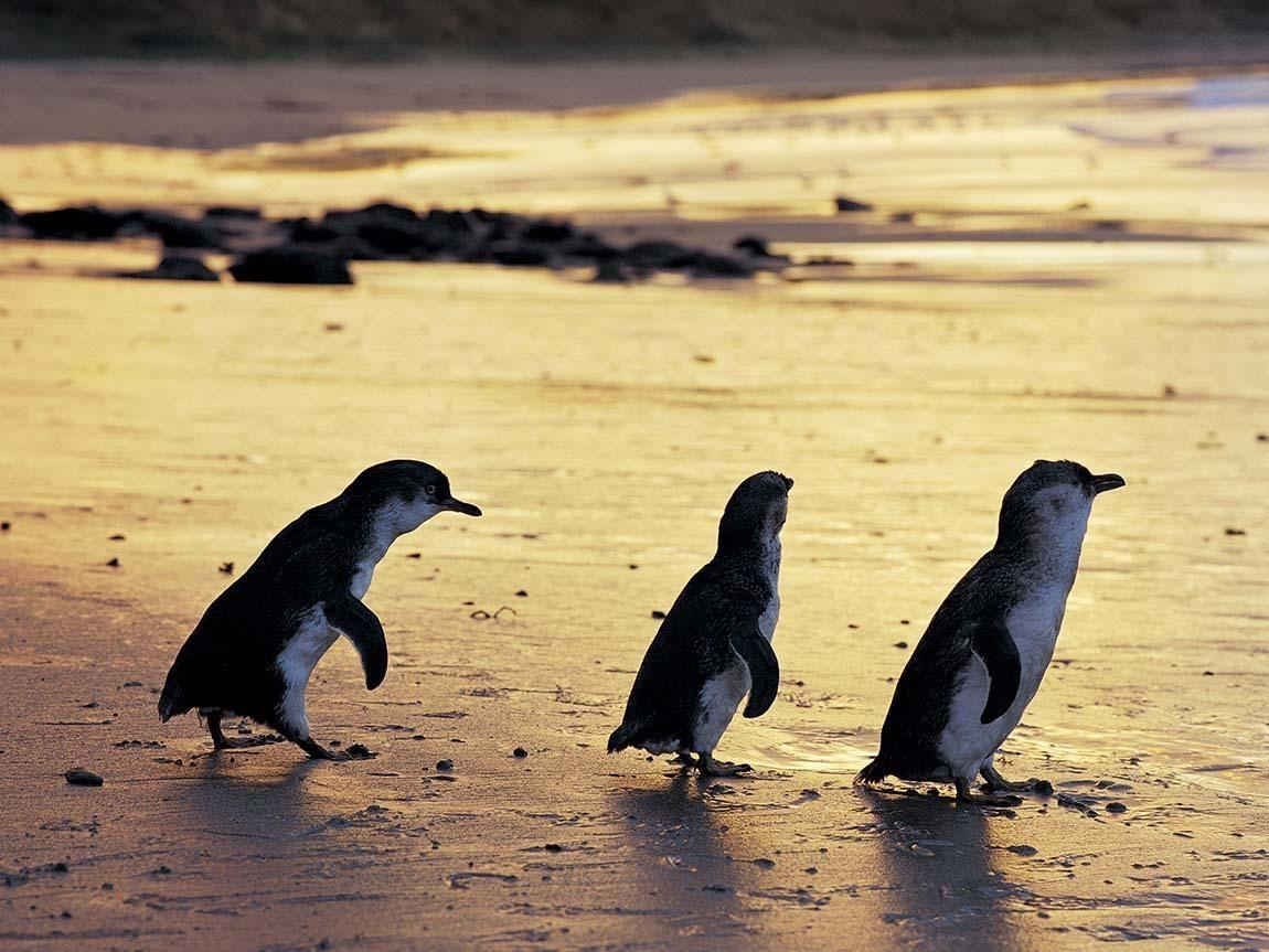 Image: http://www.visitmelbourne.com/