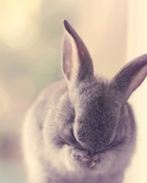 Top Ten Cruelty Free Cosmetic Companies